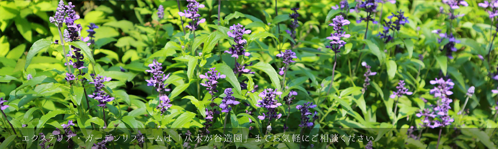 <a href='http://yakigaya-zouen.com/archives/660'></a>
